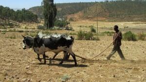 Äthiopien Rundreisen ab Addis Abeba