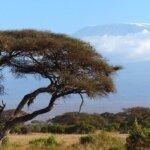 Afrika Reisen Dezember Amboseli