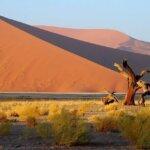 namibia singlereisen