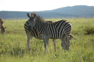 Swaziland reisen, Swasiland