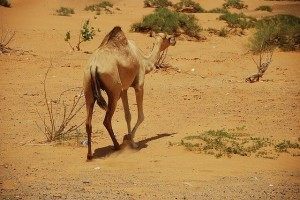 Emirat Ajman Reise