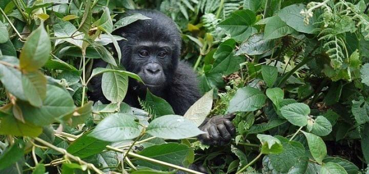 uganda trekking