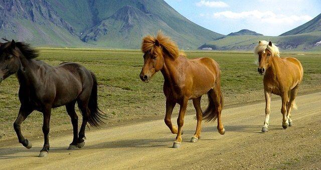 Island Reisen für junge Leute