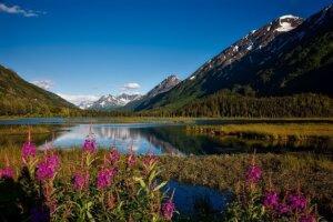 Alaska Reisen, Chugach National forest