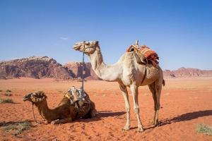 Jordanien, Wadi Rum, Kamele