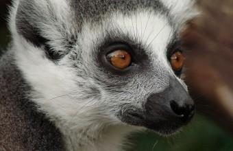 Madagaskar Reisen 2017 buchen
