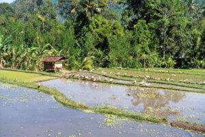 Rundreisen Indonesien , Bali Reise
