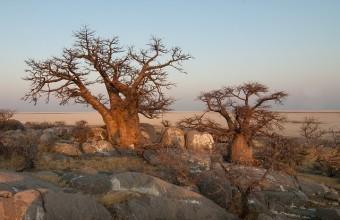 Botswana Rundreisen