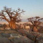 Botswana Safari Lodges