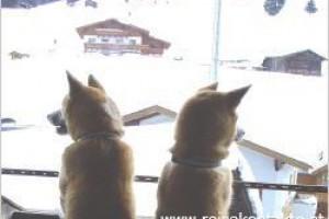 Hotel mit Hund