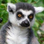 Madagaskar Aktivreise