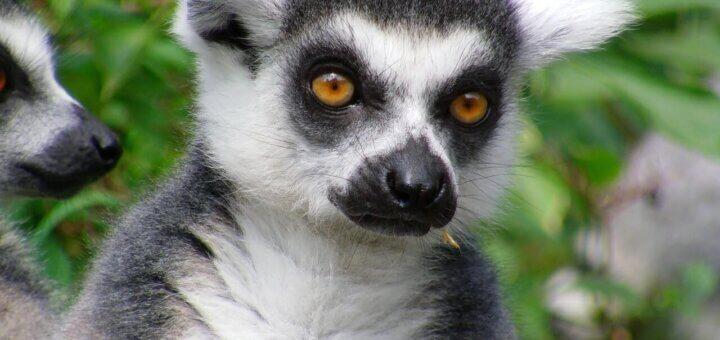 Madagaskar Reisen, Privatreisen