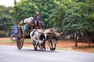 Paraguay Reise