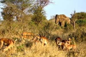 Kenia Nationalparks