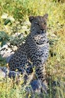 Namibia Safaris Afrika