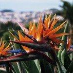 Madeira Luxushotel