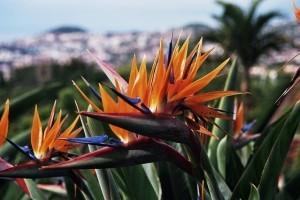 Wanderreisen Madeira