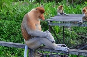 Borneo Reisen, Kinabalu