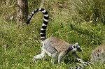Madagaskar Privatrundreisen