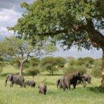 Südafrika Mosambik Elefanten
