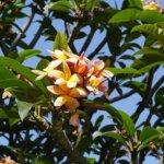 Madeira Blumeninsel