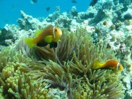 Malediven Reisen