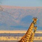 Südafrika Camping Safaris Langzeit