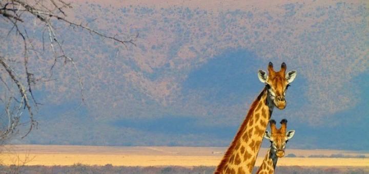 Südafrika Camping Safaris