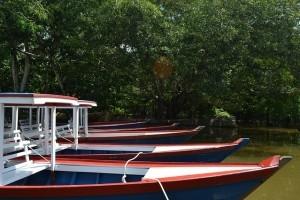 Brasilien Amazonas Reise