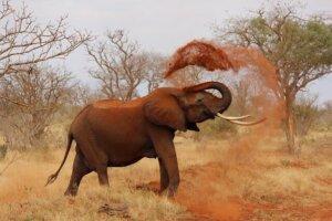 Safaris, Afrika Kenia