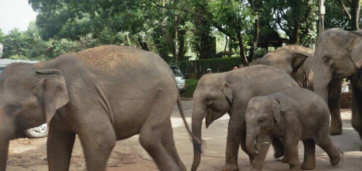 Sri Lanka Pinnawela