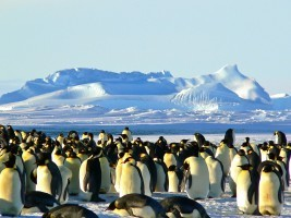 Südpol Expedition