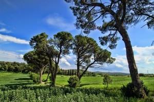 Singlereisen Toskana
