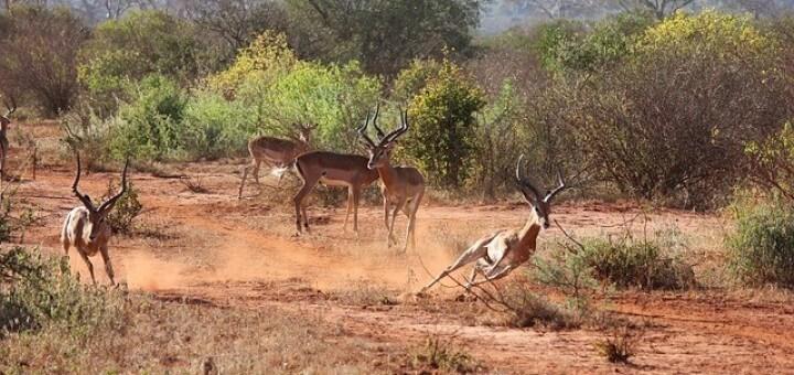 Tsavo Nationalpark Kenia