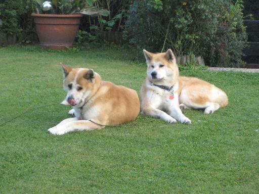 Hotel mit hund urlaub hotels hunde erlaubt for Hotel auf juist mit hund